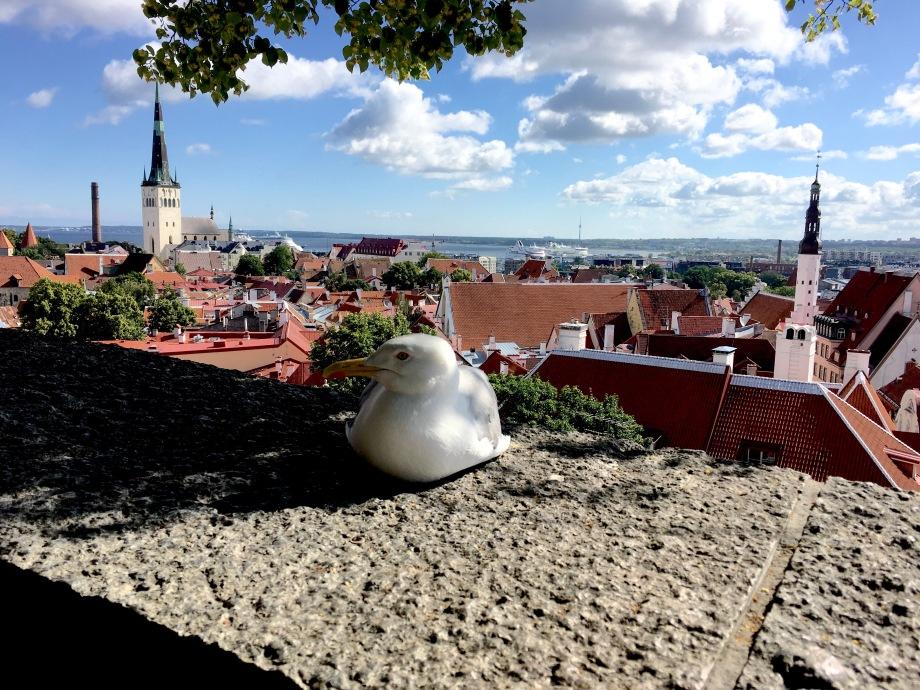 Ii Liike Tallinn? DooYoouu?