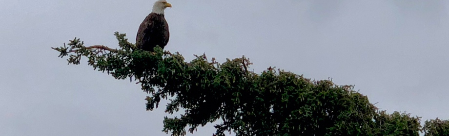 Eagle with a KeenEye